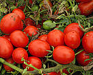 Mutti, a leading producer of tomato products, is working to improve water efficiency and get the most crop from every drop. 