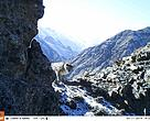 This time, 12 out of the 13 photo cameras have trapped images of snow leopard and other wild species.