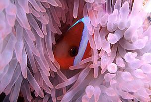 / ©: WWF-SPPO