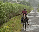 Cane farming can be carried out with low level of damage to the environment through sustainable practices