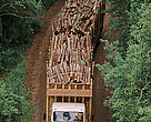 Timber being transported on a truck from the forest to the paper and cellulose mill in Telemaco Borba, Brazil.