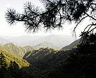 Forests cover only 18.22 per cent of the land in China, compared to an international average of 34 per cent. Mixed forest, Qin Ling Mountains, Shaanxi Province, China.