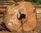 Harvested log marked with pre-certification information.