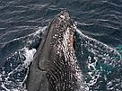 Whale / &copy;: WWF-Canon / Wim VAN PASSEL 