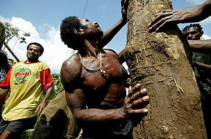 Villagers in Papua New Guinea handling log
