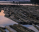 Floating logs from illegal logging on a river in front of a saw mill near Sembuluh. Central Kalimantan, Indonesia.