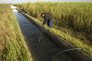 Irrigating sugar cane fields. Kafue Flats, Zambia  / ©: WWF-Canon / Martin HARVEY