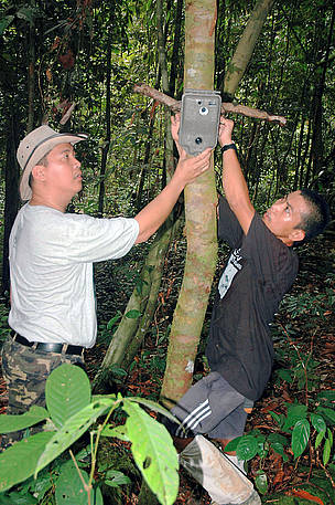 WWF staff set up the camera trap in the Bornean jungle of Sabah. This camera trap took the first ... / ©: WWF-Malaysia/Raymond Alfred