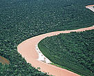 Amazon forests.