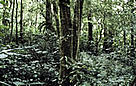 Swamp forest in the Kerinci-Seblat National Park.  / &copy;: WWF-Canon / Mauri RAUTKARI