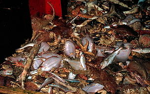 Bycatch