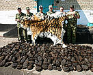 Wildlife products, bear paws and tiger skin, confiscated by Russia's Khankaiskii Frontier Detachment Unit.