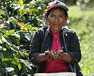 Mujer recolectora de café, centro experimental de café, San Ignacio