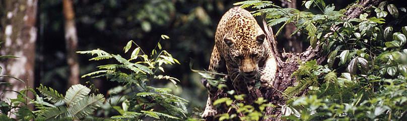 / ©: WWF-Canon / ANDRE BARTSCHI