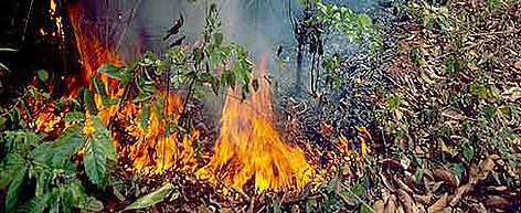 El Nino. Forest Fires. Tropical rainforest. The Amazon, Brazil, Roraima, south of Boa Vista. rel=