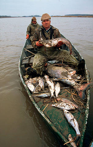 Fishermen on boat with collected dead fish from the River February 2000 - Cyanide pollution, Tisza River, Hungary.