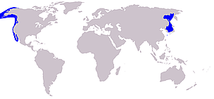 Gray whale distribution. / &copy;: Wikipedia