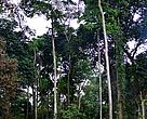 Forest in DRC, Mai Ndombe region.