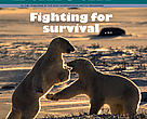Cover of December issue of the Arctic Bulletin, published by the WWF International Arctic Programme