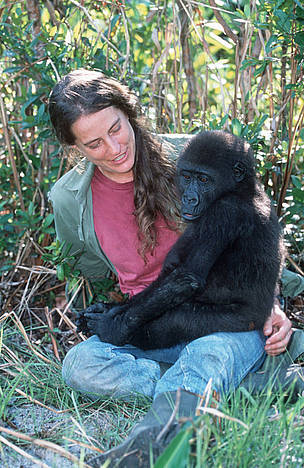 Western Lowland Gorilla. Mpassa project manager Liz Pearson with orphaned gorillas reintroduced ... / &copy;: WWF-Canon / Martin HARVEY