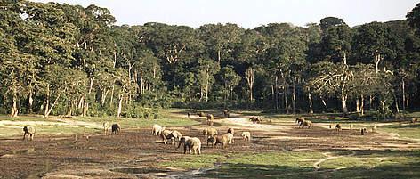 Forest As Habitat