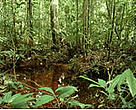 ARPA aims to create a vast network of protected areas in Brazil. Jaú National Park, Brazil.<BR>