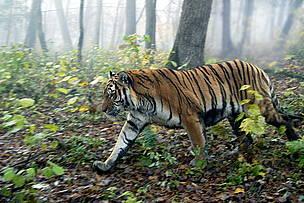 圖片來自:WWF。