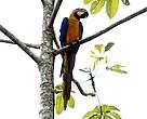 la conferencia del clima de las Naciones Unidas (UNFCCC/CoP20) será llevada a cabo en uno de los países que comparten el Bioma Amazónico – Perú.