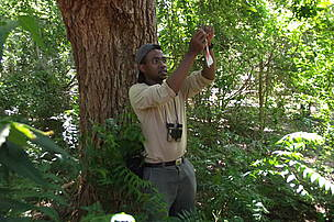 Aingafaniry Razafimahatratra of Madagascar marking the feeding trees