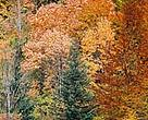 Autumn leaves, Velebit, Croatia.