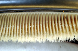 Baleen / &copy;: NOAA