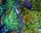 A phytoplankton (algal) bloom fills much of the Baltic Sea. Summer 2005.