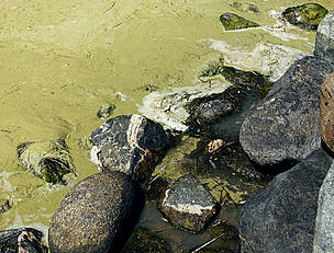 The water is not safe for people or animals when the algal bloom arrives in the Baltic Sea. / &copy;: Anders Modig