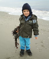 A child plays with seaweed on the Baltic Coast. / &copy;: Alle Tiders Ls