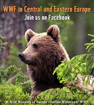  / &copy;: Wild Wonders of Europe / Staffan Widstrand / WWF
