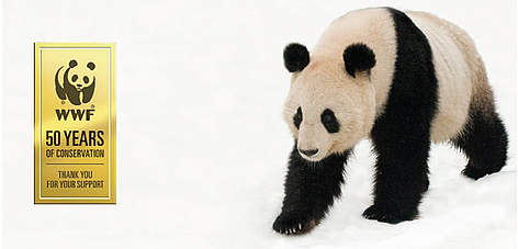 Giant Panda in the snow. rel=