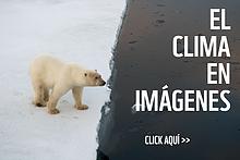 / ©: Steve Morello / WWF-Canon