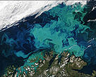 Spectacular phytoplankton bloom in the Barents Sea Image courtesy Jacques Descloitres, MODIS Rapid Response Team at NASA GSFC