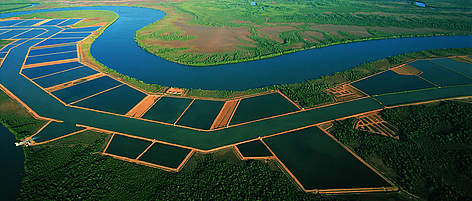 Aerial shot of fish ponds with mangroves in the background. rel=
