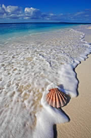 Scallop shell on beach. Seychelles / &copy;: WWF-Canon / Martin HARVEY
