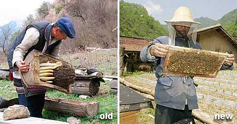 A change in bee keeping brings more honey and saves forests. rel=