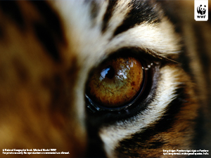 / ©: National Geographic Stock / Michael Nicols / WWF