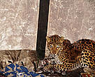A leopard found in a house near Bhutan's Thrumshingla National Park.