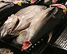 Bigeye Tuna for sale at the fish market in Hawaii.