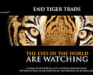 It is estimated that fewer than 7,000 tigers remain in the wild. Around 9,000 exist in captivity, the vast majority in the USA and China. 