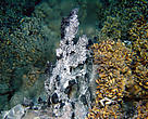Deep sea hydrothermal vent (black smoker)