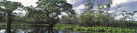 Floating vegetation (Eichornia sp.) and trees (Abarema sp., Macrolobium acaciafolium) in the forest ... rel=