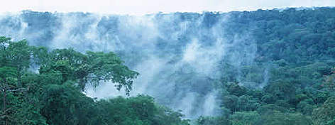 Tropical rainforest. Western Congo Basin, Gabon. rel=