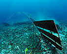 A bottom trawler scrapes the ocean floor destroying the habitat, Baja California, Mexico