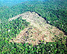 Aerial view of forest clearing to create grazing pasture for cattle. Amazon, Brazil.